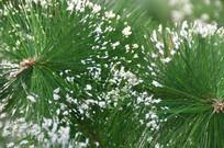 圣诞装饰品圣诞树仿真树特写图片