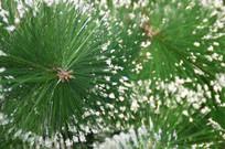 圣诞装饰品圣诞树仿真树图片
