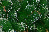 圣诞装饰品圣诞树图片