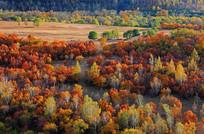 五色斑斓的秋季树林