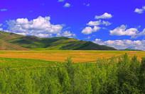 白云下的山岭麦田