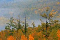 龙岩山秋林晨雾
