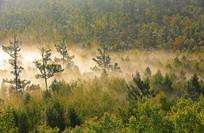 秋季山林晨雾