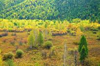 秋季山林林景观