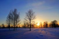 夕照雪原树林