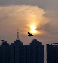 黄昏在天津城市上空飞翔的海鸥