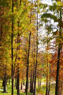 秋天树木风景图片