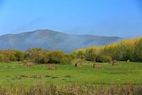 山岭下的秋季牧场