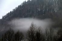 云雾缭绕的山林