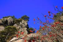 蓝天下的黄山奇石