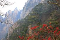 秋季黄山景观