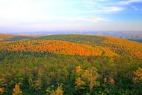 秋季原始森林景观