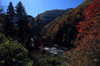 秋季山区河流树木
