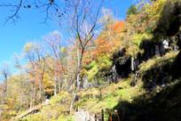 树木栈道秋季