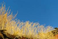 屋檐上的枯草