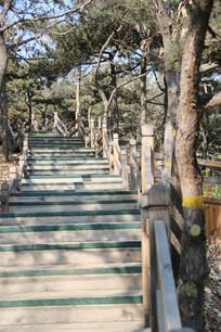 木制台阶的森林公园