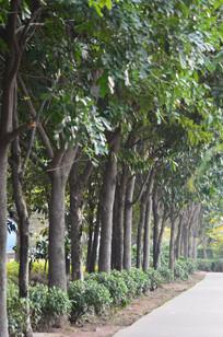 路边的一排树木