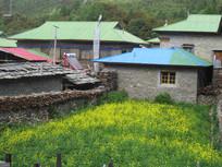 乡村田野风景图片