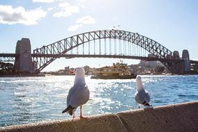 阳光下的悉尼大桥