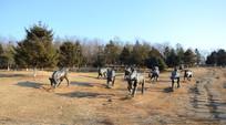 山坡上金属雕塑牛群