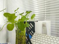 办公室绿色植被
