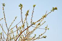 梅花花枝图片