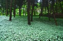 一片花草草坪风景图片