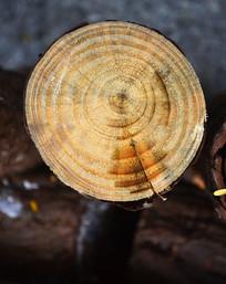 树木年轮图片
