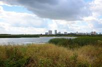 哈尔滨江北湿地公园阴天风景