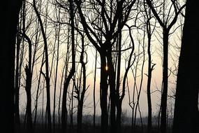 傍晚的树林