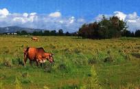 草原风光装饰画