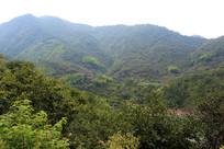 青山 绿山