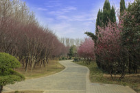 梅园里的步行小道