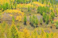 山坡秋林风光