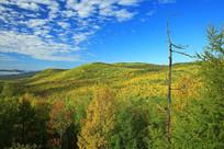 原始森林的秋天