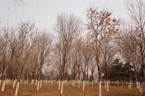 整齐的树林