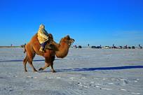 赛场上奔跑的骆驼
