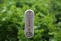 蔬菜大棚里的温度计