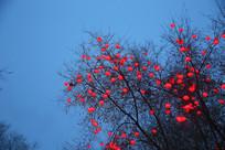 挂满树枝的红灯笼