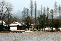 湖泊亭台楼阁树木冬雪景