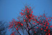 树枝上的红灯笼
