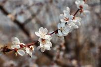 倾斜的一枝桃花