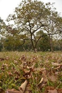 秋天的枯叶