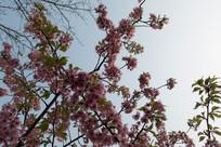 树枝上的花朵