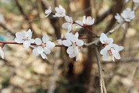 树枝上的几朵桃花
