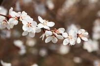 桃林里的一枝桃花