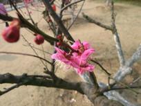 俯视红色梅花摄影图