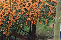 黄色花卉花棚图片