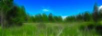 电脑画《绿草地》