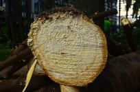 树干年轮图片